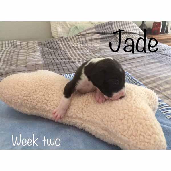 week2-jade-2