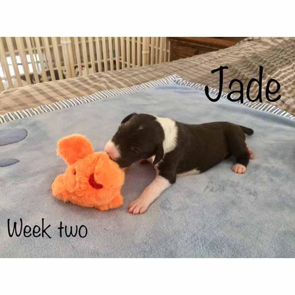 week2-jade-3