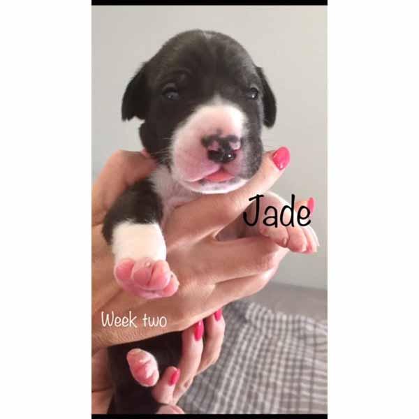 week2-jade-4