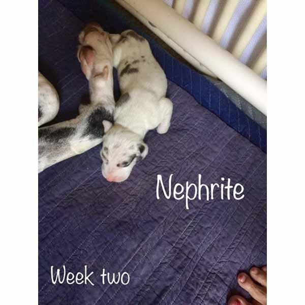 week2-nephrite-1