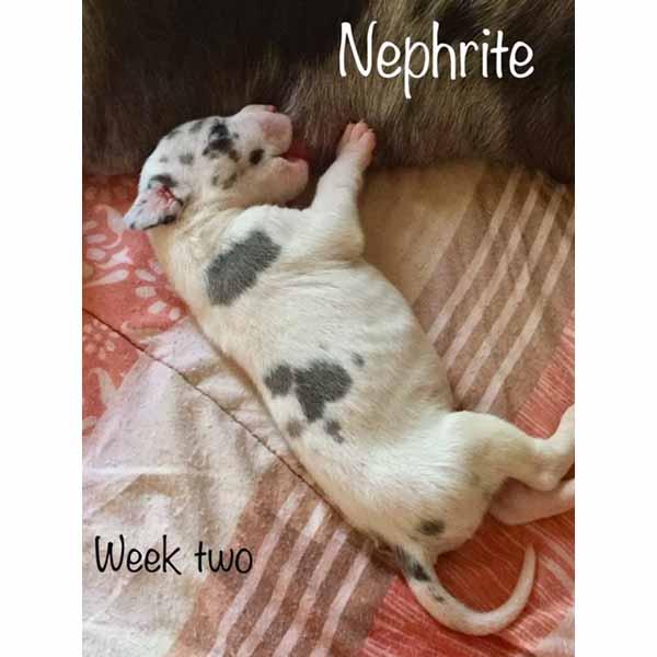 week2-nephrite-3