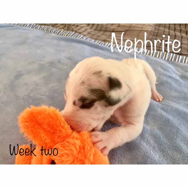 week2-nephrite-5