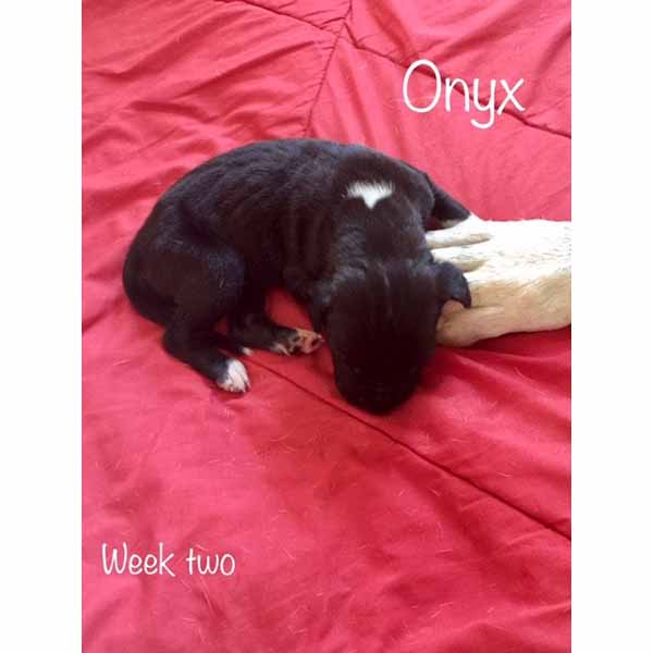 week2-onyx-1