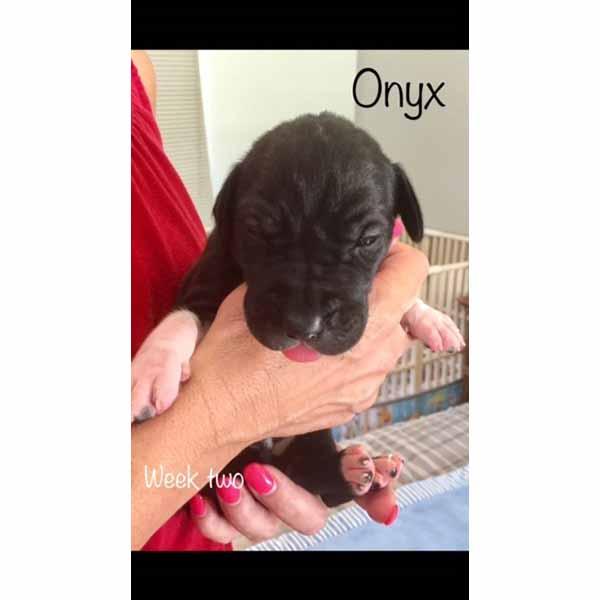 week2-onyx-4
