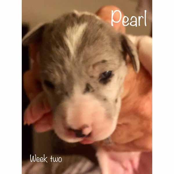 week2-pearl-1