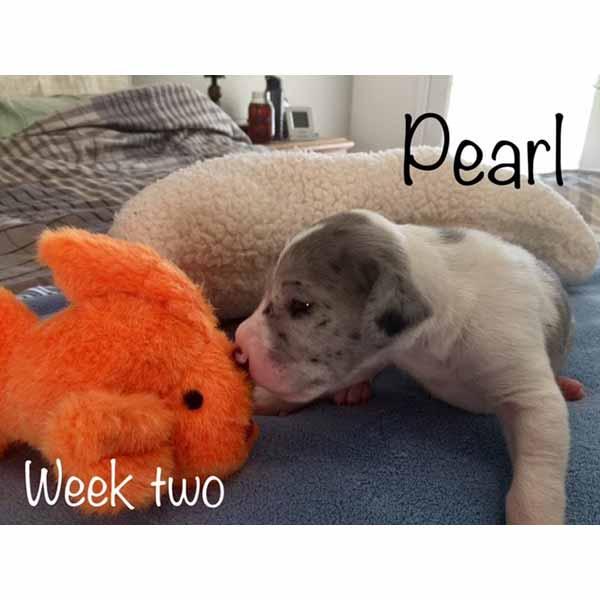 week2-pearl-3