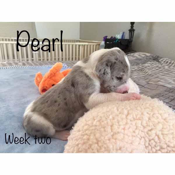 week2-pearl-4