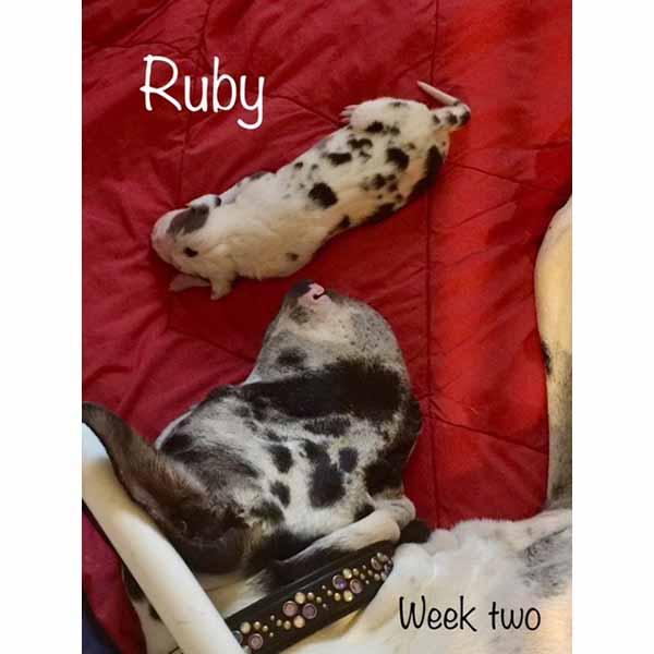 week2-ruby-1