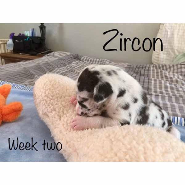 week2-zircon-2