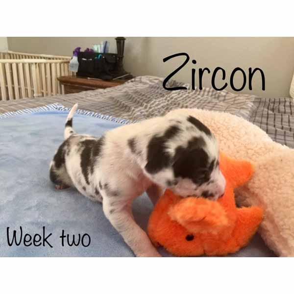 week2-zircon-3