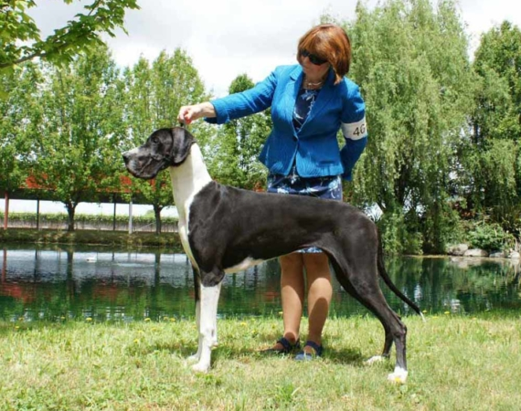 Darcy Mantle Great Dane